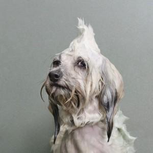 """""""Chó ướt"""" (Ảnh: Sophie Gamand - chỉ có tính minh họa)"""