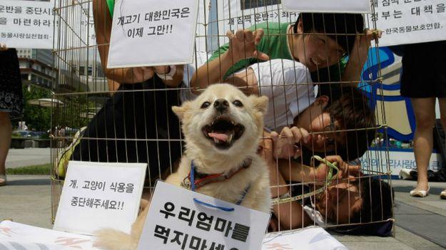 Giới vận động Hàn Quốc phản đối ăn thịt chó