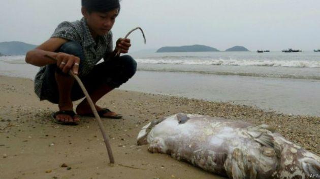 Giới chức Việt Nam cho hay họ đang tiếp tục điều tra nguyên nhân vụ cá chết hàng loạt.