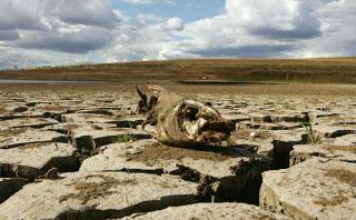 Rừng đã bị phá thì nguồn nước cũng cạn kiệt Ảnh: ST