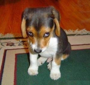Xin lỗi, tôi không cố ý đi tiểu trên thảm đâu (Hình vui, st trên mạng, không nhất thiết để mih họa)