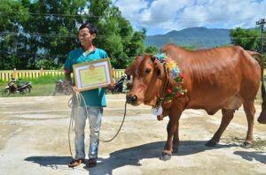 Ảnh: Cô bò cái giành danh hiệu hoa hậu năm nay.