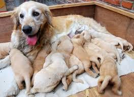 Chó con quây quần quanh chó... má