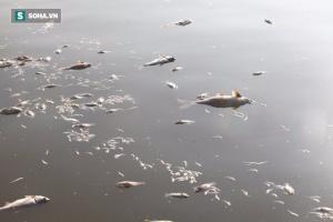 Cá chết ở Hồ Tây (Ảnh: Internet)