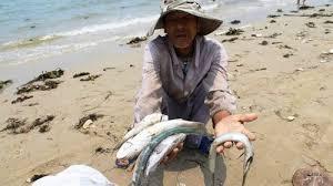 Thảm họa môi trường mang tên Formosa là một sự kiện nổi bật của năm 2016